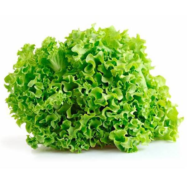 Lettuce Lollo Bionda, Europe - Per Kg