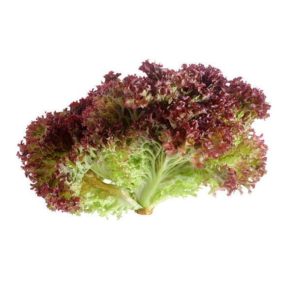 Lettuce Lollo Rosso, Europe - Per Kg