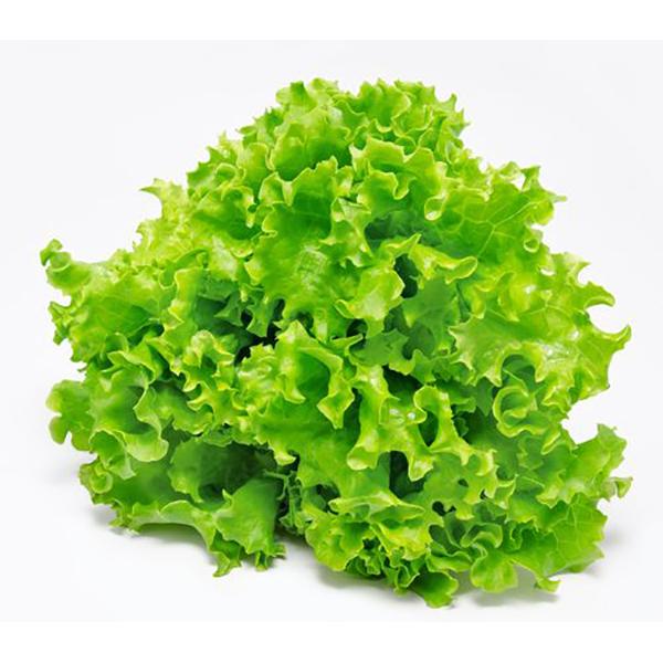 Lettuce Oak Leaf, Europe - Per Kg