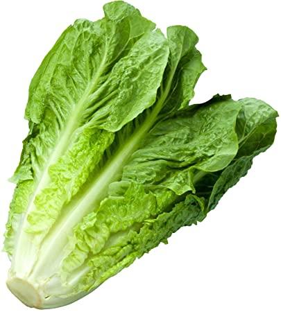 Lettuce Romaine, M-East - Per Kg