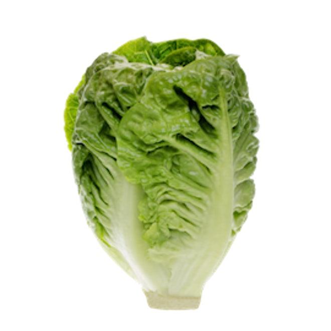 Lettuce Baby Gem, Europe - 500gm