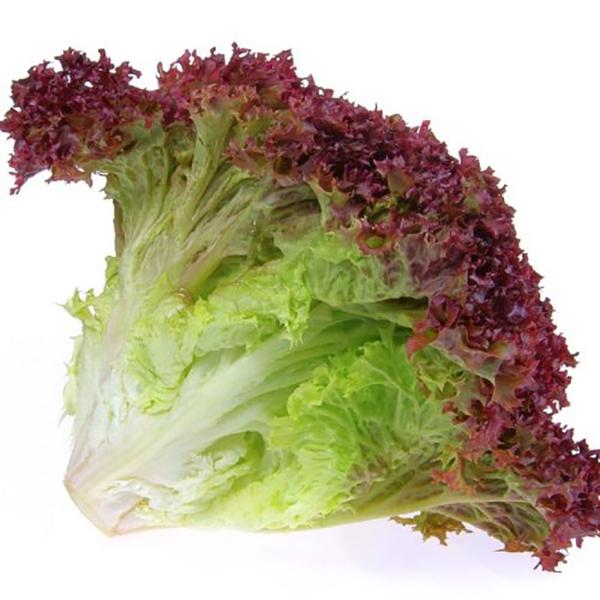 Red Lettuce, Holland - Per Kg